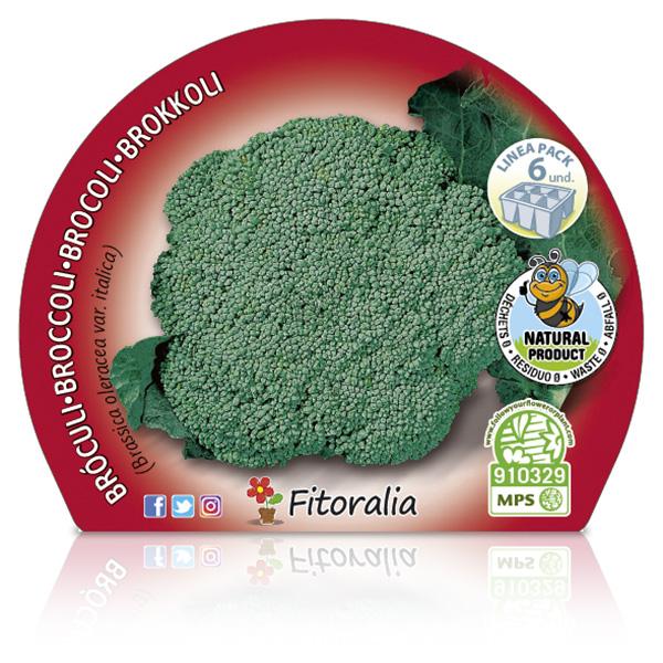 Pack Brócoli 6 Ud.