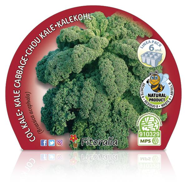 Pack Col Kale 6 Ud.
