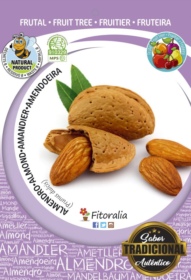 Almendro Marcona M-10,5 - Prunus dulcis