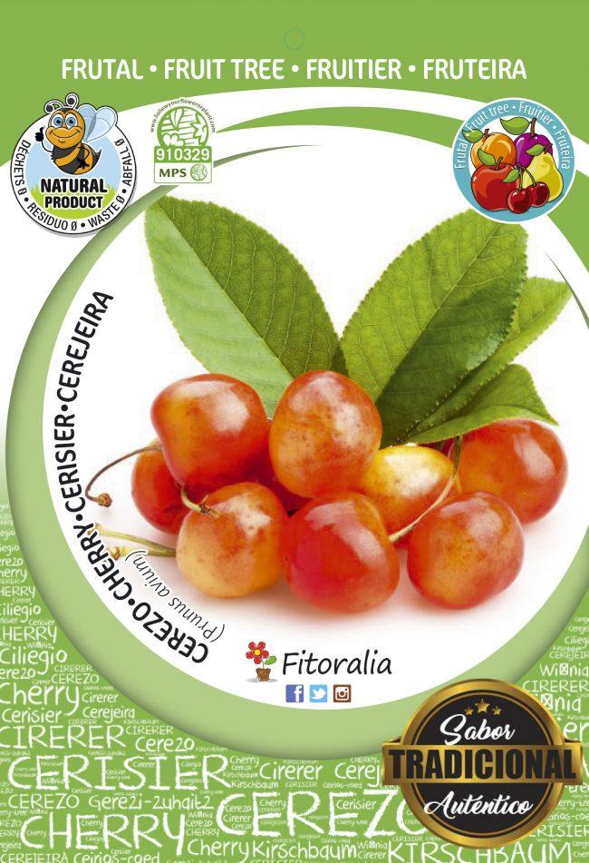 Cerezo Napoleón M-25 - Prunus avium