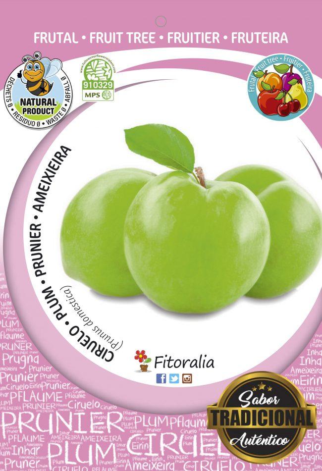 Ciruelo Claudia Verde M-25 - Prunus domestica