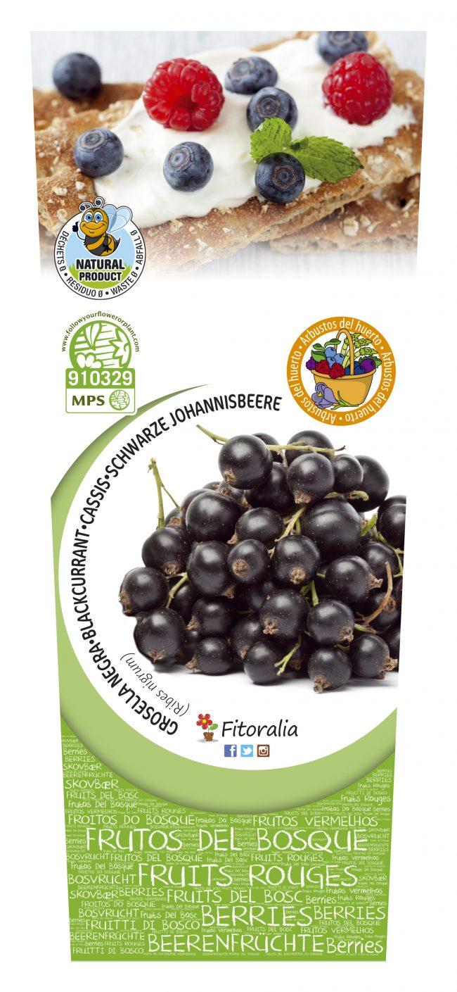 Grosella Negra 2l Ribes nigrum