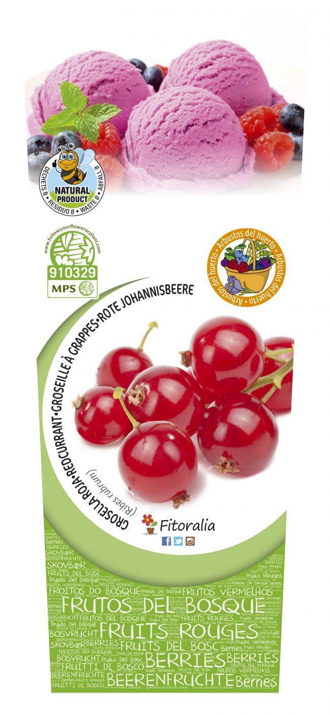 Grosella Roja 2l Ribes rubrum