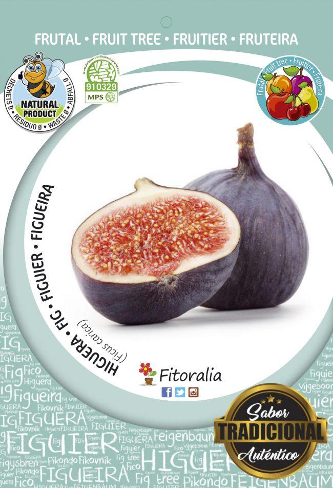 Higuera Breva M-25 - Ficus carica