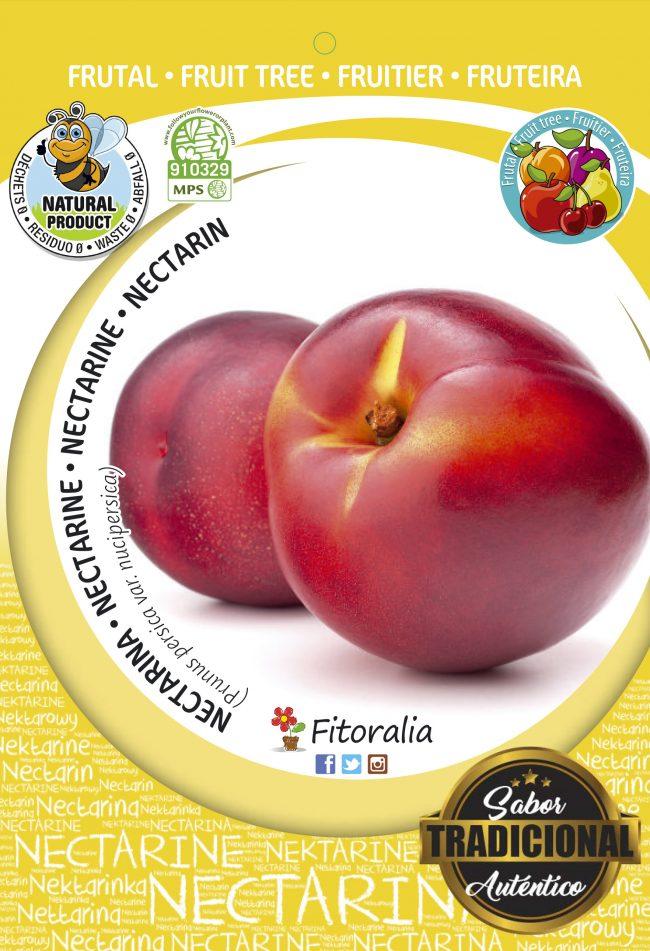 Nectarina Big Top M-25 - Prunus persica var.Nucipersica