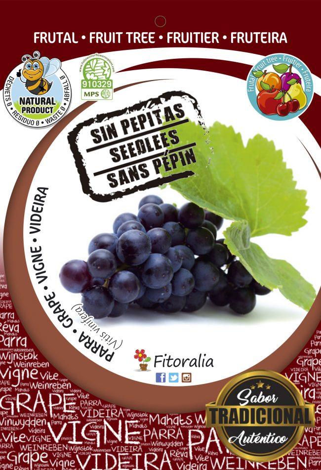 Parra Auntumn Royal Seedless M-25 - Vitis vinifera