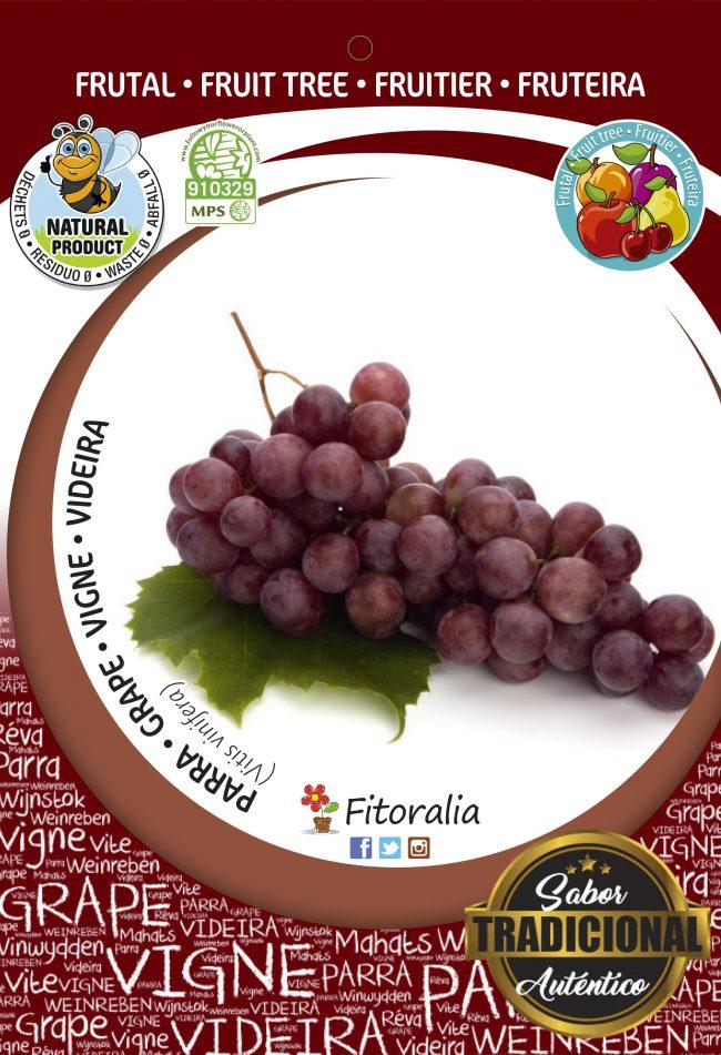 Parra Cardinal M-25 - Vitis vinifera