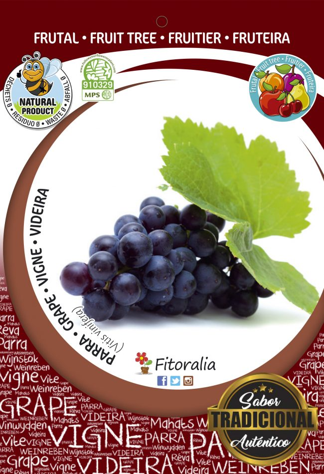 Parra Napoleón M-25 - Vitis vinifera