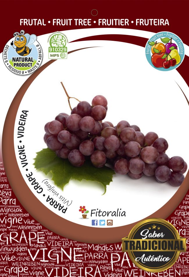 Parra Red Globe M-25 - Vitis vinifera