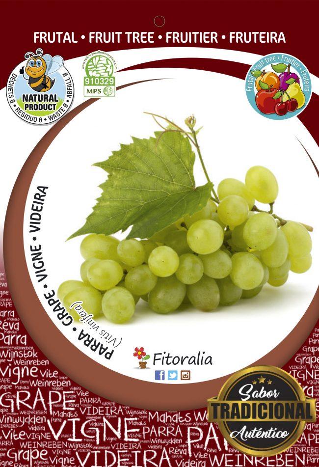 Parra Victoria M-25 - Vitis vinifera