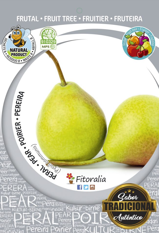 Peral Conference M-25 - Pyrus communis