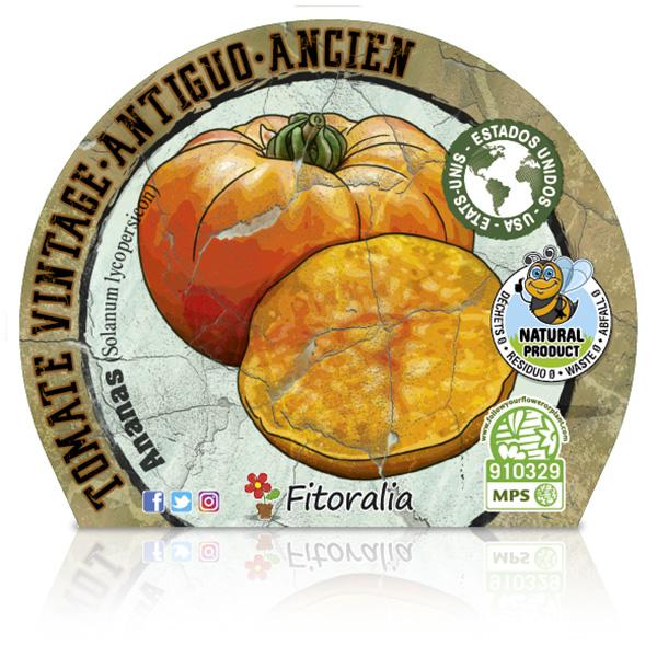 Tomate Ananas M-10,5 Solanum lycopersicum E W