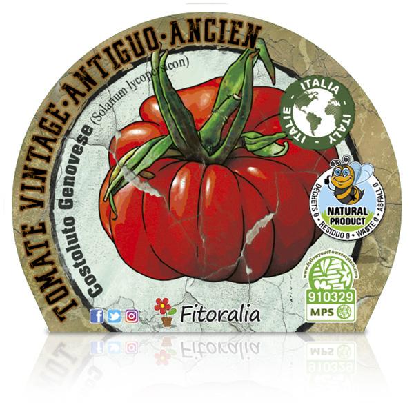 Tomate Costoluto Genovese M-10,5 Solanum lycopersicum E W