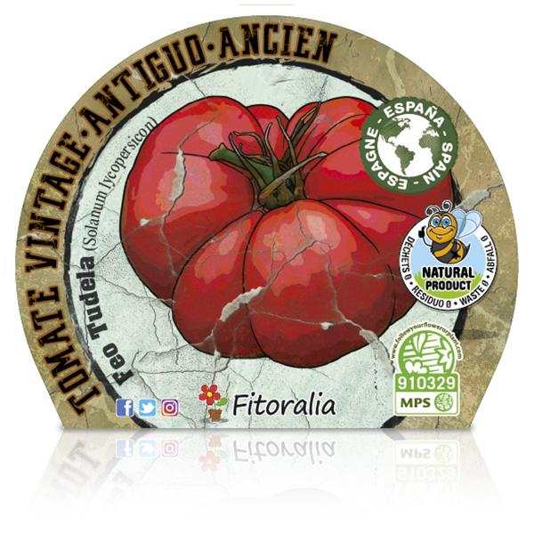 Tomate Feo Tudela M-10,5 Solanum lycopersicum E W