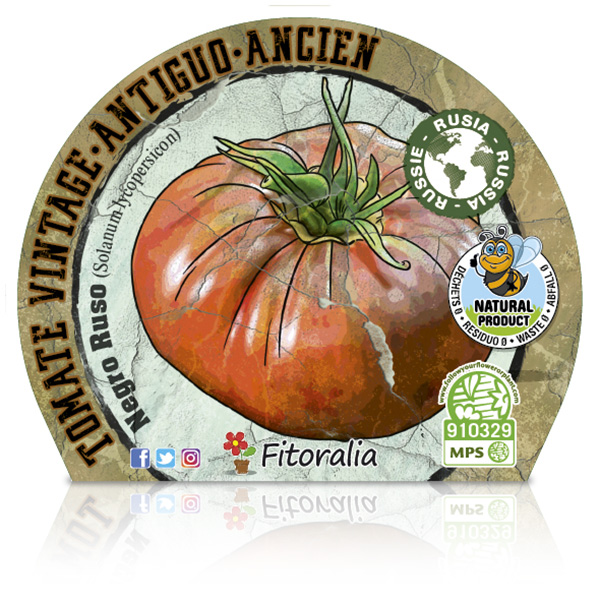 Tomate Negro Ruso M-10,5 Solanum lycopersicum E W