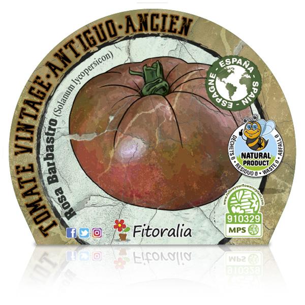 Tomate Rosa Barbastro M-10,5 Solanum lycopersicum E W