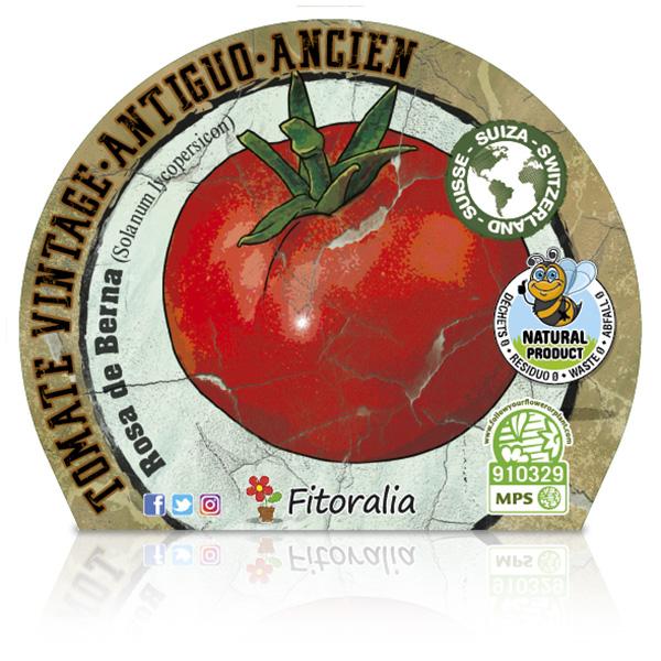 Tomate Rosa de Berna M-10,5 Solanum lycopersicum E W