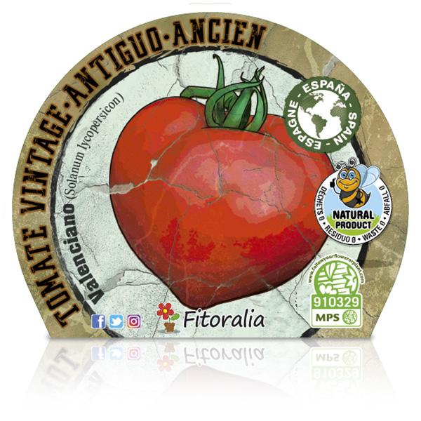 Tomate Valenciano M-10,5 Solanum lycopersicum E W