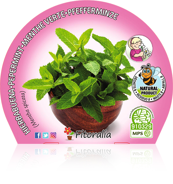 Hierbabuena M-10,5 Mentha spicata