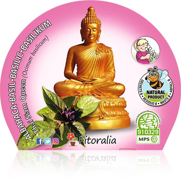Albahaca Thai Siam Queen M-10,5 Ocimum basilicum