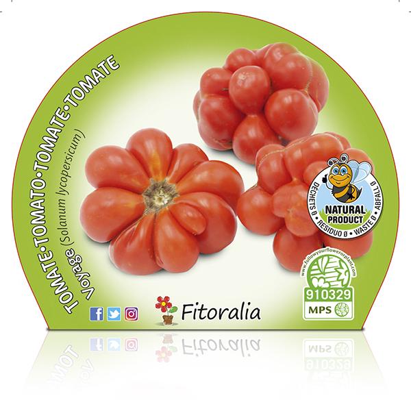 Tomate Voyage M-10,5