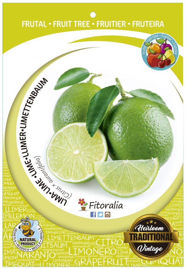 Lima M-25 - Citrus x aurantifolia