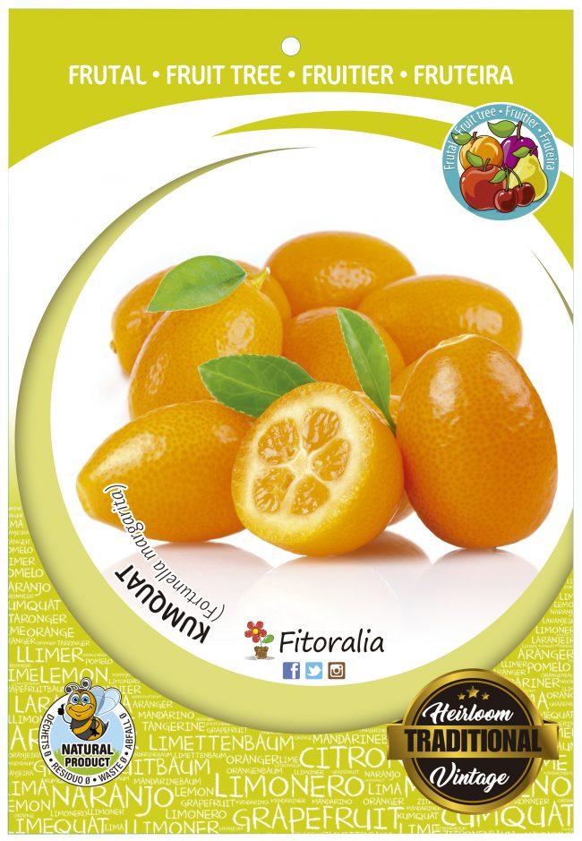 Kumquat M-25 - Fortunella marginata