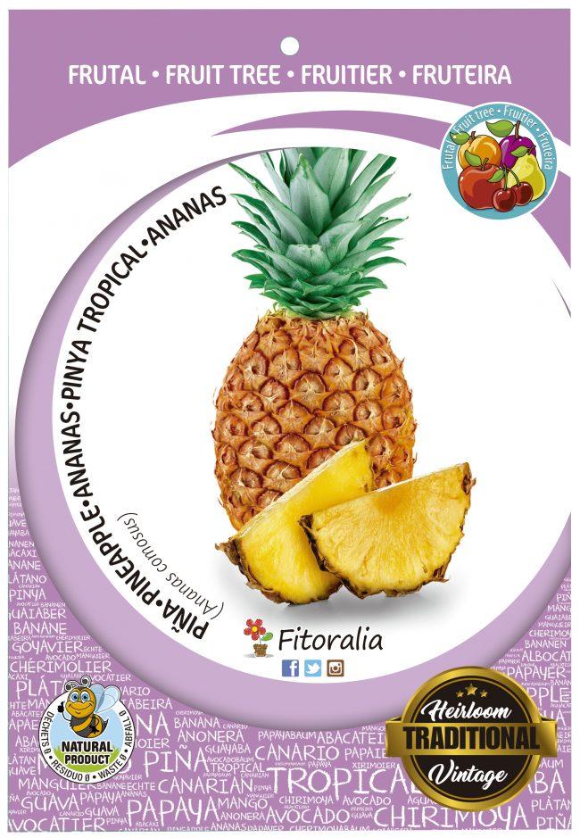 Piña M-25 - Ananas comosus