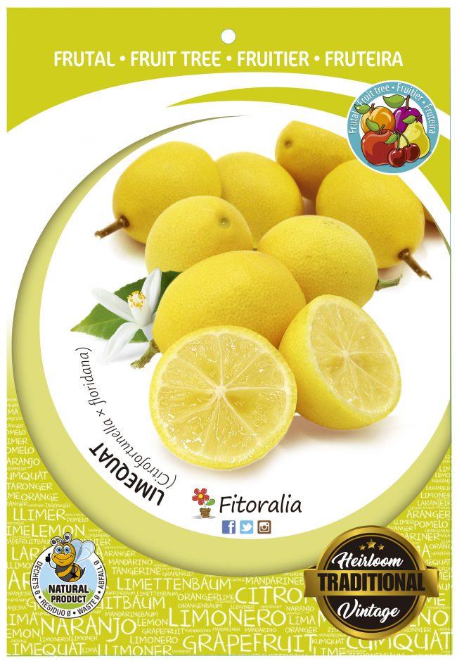 Limequat M-25 - Citrofortunella x floridana