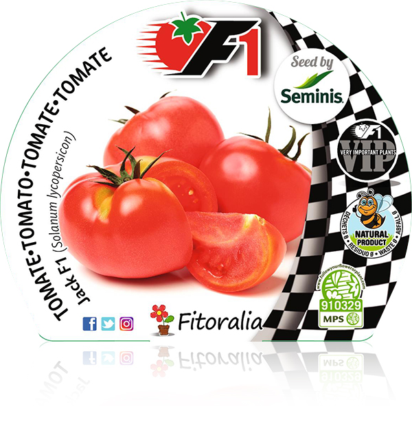 Tomate Jack F1 6 Ud. Solanum lycopersicon