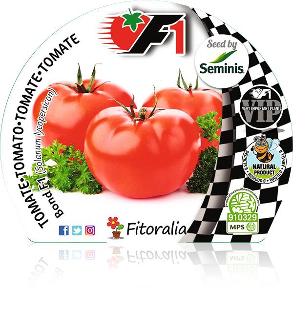Tomate Bond F1 6 Ud. Solanum lycopersicon