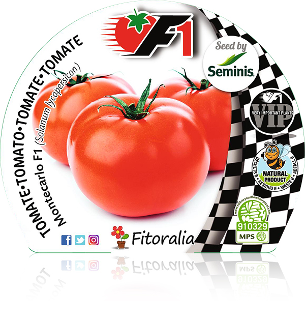 Tomate Montecarlo F1 6 Ud. Solanum lycopersicon