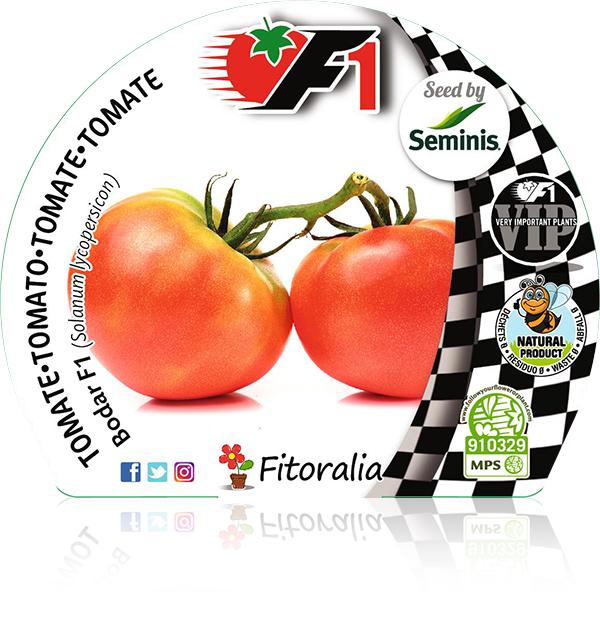 Tomate Bodar F1 6 Ud. Solanum lycopersicon