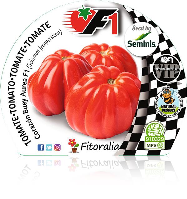 Tomate Corazón de Buey Aurea F1 6 Ud. Solanum lycopersicon